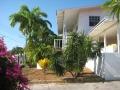Tuin met hoge palmen