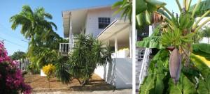 Hoge palmen en bananen